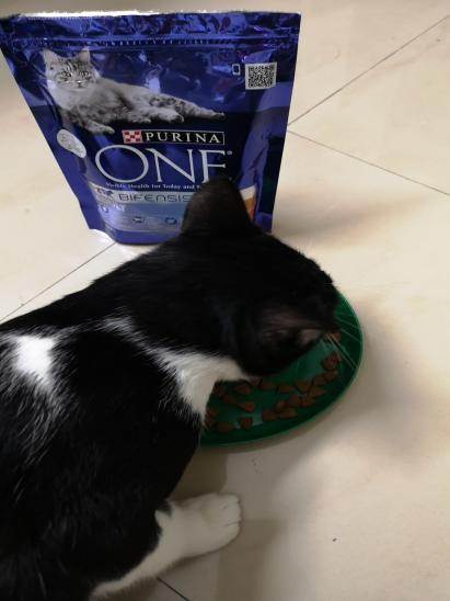 Purina ONE cat food par Pinoy