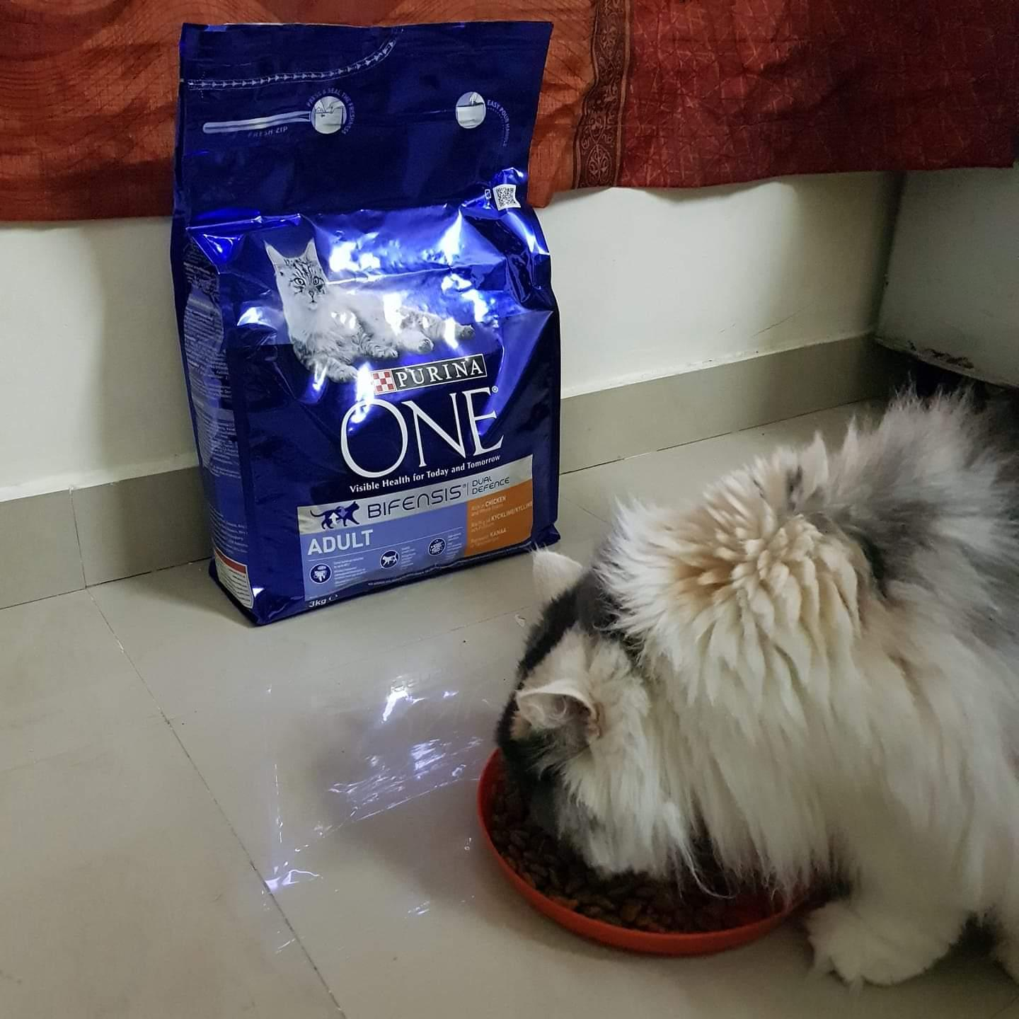 Purina ONE cat food par Soo