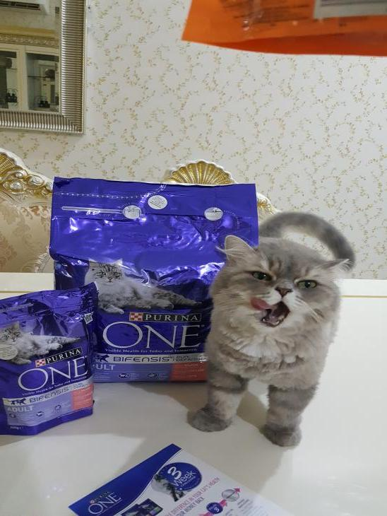 Purina ONE cat food par Ambar