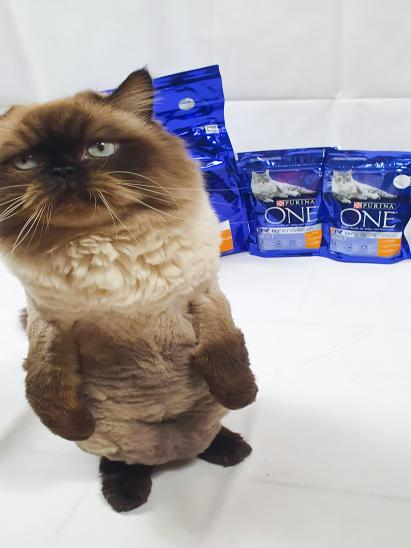 Purina ONE cat food par Britta