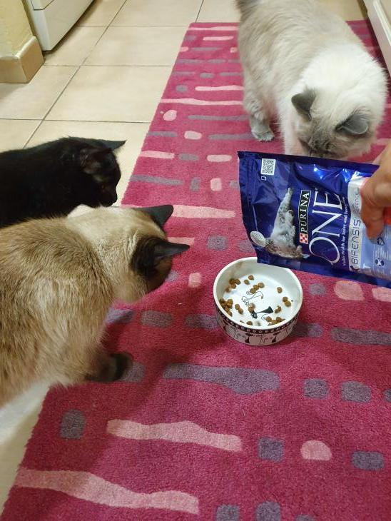 Purina ONE cat food par Niveen