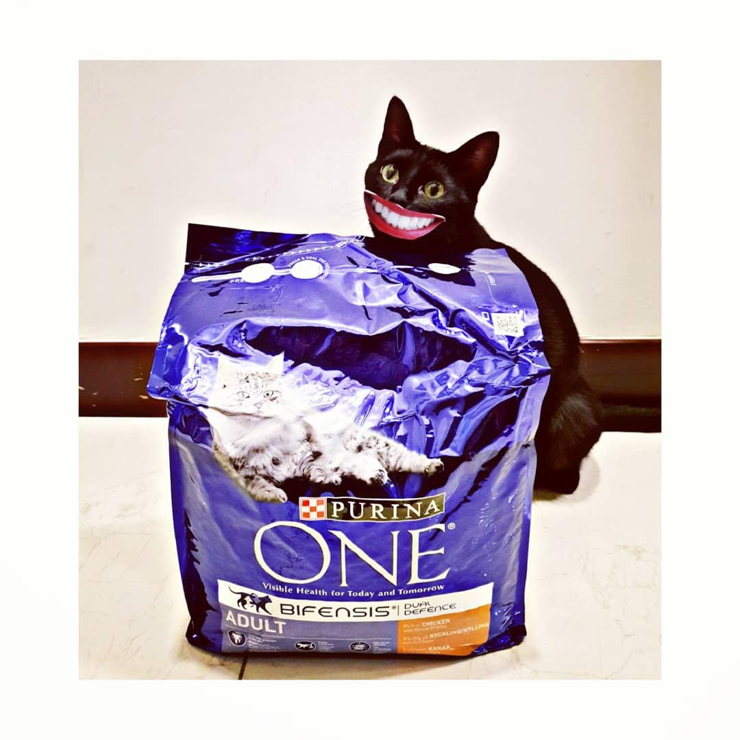 Purina ONE cat food par Jasmine