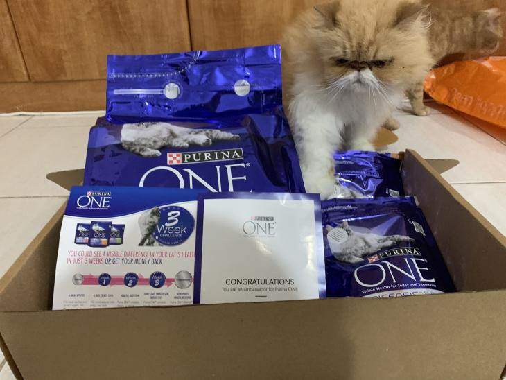 Cat food par Queenie
