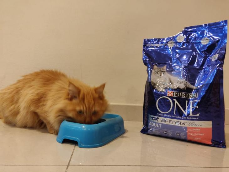 Cat food par Rubina