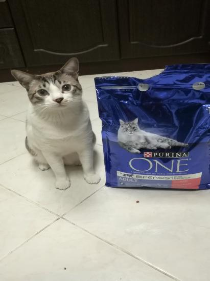 Cat food par Tibyan