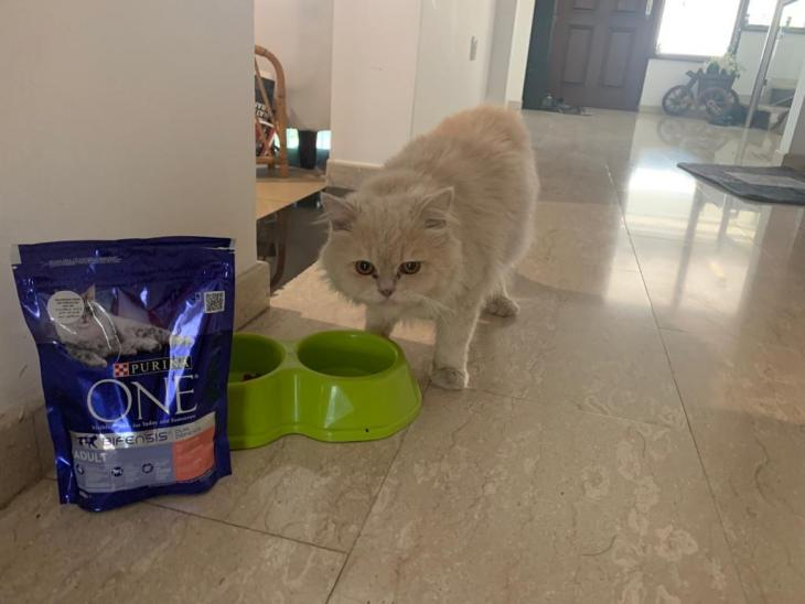 Cat food par Masood